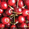 CERISIER Cherry boop(r)