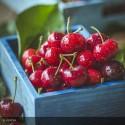 CERISIER Cherry Baby