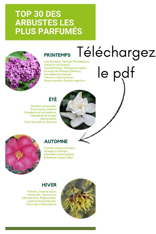 Infographie Top 30 des arbustes les plus parfumés