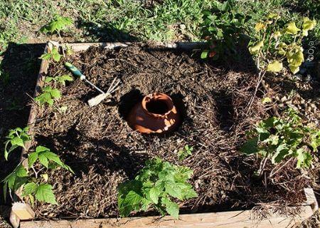 Comment gérer l'arrosage de vos plantes en été ?